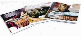 Фото товара Тетрадь ученическая 12 листов, косая линия, Brisk TB-107, серия `Kittens`
